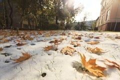 Φύλλα φθινοπώρου στο χιόνι Στοκ Εικόνες