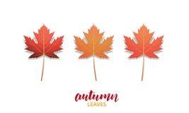 Φύλλα φθινοπώρου Συλλογή σχεδίου φύλλων πτώσης για την αγγελία, το έμβλημα, το υπόβαθρο κ.λπ. Φθινοπώρου φύλλα που απομονώνονται  Στοκ Εικόνες
