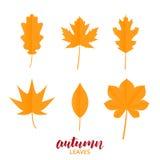 Φύλλα φθινοπώρου Συλλογή των φύλλων πτώσης στο καθιερώνον τη μόδα επίπεδο ύφος Διανυσματικά φύλλα φθινοπώρου καθορισμένα Στοκ φωτογραφίες με δικαίωμα ελεύθερης χρήσης