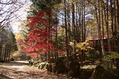 Φύλλα φθινοπώρου του οροπέδιου Yatsugatake στοκ εικόνα