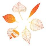 Φύλλα φθινοπώρου Τυποποιημένα πορτοκαλιά φύλλα που βρίσκονται σε έναν κύκλο Ένα στρογγυλό λογότυπο με τα φύλλα Εγκαταστάσεις με τ Στοκ εικόνα με δικαίωμα ελεύθερης χρήσης