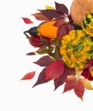 Φύλλα φθινοπώρου των άγριων κολοκυθών σταφυλιών, φύλλωμα. Στοκ εικόνες με δικαίωμα ελεύθερης χρήσης