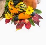 Φύλλα φθινοπώρου των άγριων σταφυλιών και της κολοκύθας Στοκ Εικόνες