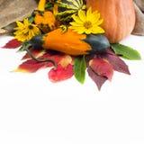 Φύλλα φθινοπώρου των άγριων σταφυλιών και της κολοκύθας Στοκ εικόνες με δικαίωμα ελεύθερης χρήσης