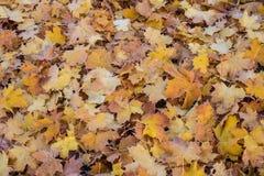 Φύλλα φθινοπώρου/χειμώνα που καλύπτονται στην πάχνη ξημερωμάτων Στοκ φωτογραφία με δικαίωμα ελεύθερης χρήσης