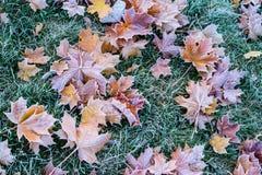 Φύλλα φθινοπώρου/χειμώνα που καλύπτονται στην πάχνη ξημερωμάτων Στοκ εικόνα με δικαίωμα ελεύθερης χρήσης