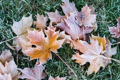 Φύλλα φθινοπώρου/χειμώνα που καλύπτονται στην πάχνη ξημερωμάτων Στοκ Εικόνα