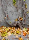 Φύλλα φθινοπώρου. Στοκ Φωτογραφία