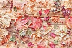 Φύλλα φθινοπώρου Στοκ Εικόνα