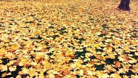 Φύλλα φθινοπώρου Στοκ φωτογραφίες με δικαίωμα ελεύθερης χρήσης