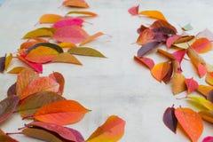 10 φύλλα φθινοπώρου Στοκ Εικόνα