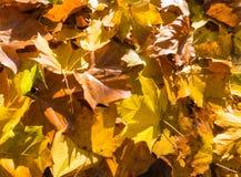 Φύλλα φθινοπώρου Στοκ Φωτογραφία