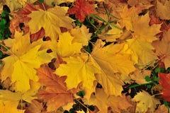 φύλλα 1 φθινοπώρου στοκ φωτογραφία με δικαίωμα ελεύθερης χρήσης
