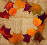Φύλλα φθινοπώρου burlap υφασμάτων Στοκ εικόνες με δικαίωμα ελεύθερης χρήσης