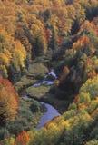 Φύλλα φθινοπώρου, Porcupine κρατικό πάρκο, Μίτσιγκαν στοκ εικόνα