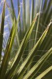 Φύλλα φοινίκων Στοκ Φωτογραφία