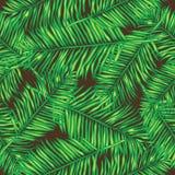 Φύλλα φοινικών άνευ ραφής διάνυσμα ανασκό floral Στοκ Εικόνες
