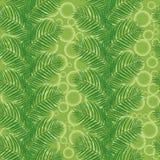 Φύλλα φοινικών σε ένα πράσινο υπόβαθρο με τους κύκλους Στοκ Εικόνες