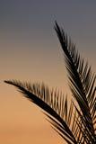 Φύλλα φοινικών στη σκιαγραφία Στοκ Εικόνες