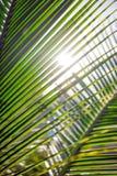 Φύλλα φοινικών, φυτό πέρα από το υπόβαθρο φύσης, ropical δέντρο παραλιών Στοκ φωτογραφίες με δικαίωμα ελεύθερης χρήσης