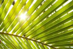 Φύλλα φοινικών Στοκ Εικόνα