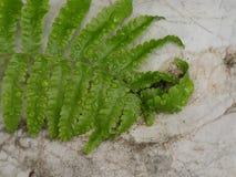 Φύλλα φτερών με τις πτώσεις νερού στο βράχο Στοκ φωτογραφία με δικαίωμα ελεύθερης χρήσης