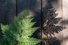 Φύλλα φτερών Στοκ Εικόνες
