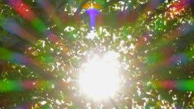 Φύλλα φυσικού υποβάθρου μέσω των οποίων οι ακτίνες ήλιων ` s πέφτουν απόθεμα βίντεο