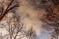 Φύλλα ως πεταλούδες Στοκ φωτογραφίες με δικαίωμα ελεύθερης χρήσης