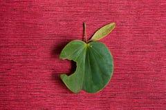 Φύλλα όπως τη Apple σε ένα κόκκινο υπόβαθρο Στοκ φωτογραφίες με δικαίωμα ελεύθερης χρήσης