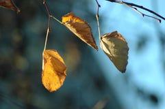 Φύλλα Στοκ εικόνα με δικαίωμα ελεύθερης χρήσης