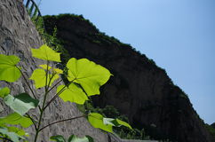 Φύλλα Στοκ Εικόνες