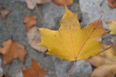 Φύλλα στοκ φωτογραφίες με δικαίωμα ελεύθερης χρήσης