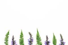 Φύλλα Arrangment Wildflowers και φτερών στο άσπρο υπόβαθρο Στοκ φωτογραφία με δικαίωμα ελεύθερης χρήσης