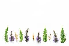 Φύλλα Arrangment Wildflowers και φτερών στο άσπρο υπόβαθρο Στοκ Εικόνες