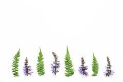 Φύλλα Arrangment Wildflowers και φτερών στο άσπρο υπόβαθρο Στοκ εικόνα με δικαίωμα ελεύθερης χρήσης