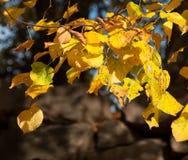 Φύλλα Autmn Στοκ Εικόνες