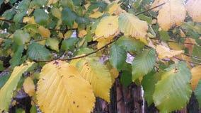 Φύλλα Autum Στοκ φωτογραφία με δικαίωμα ελεύθερης χρήσης