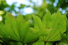 Φύλλα Bokeh Στοκ φωτογραφία με δικαίωμα ελεύθερης χρήσης