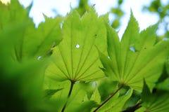 Φύλλα Bokeh Στοκ εικόνα με δικαίωμα ελεύθερης χρήσης