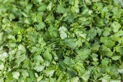 Φύλλα Cilantro στοκ εικόνες