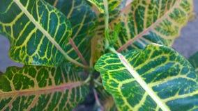 Φύλλα Colourfull στοκ φωτογραφία