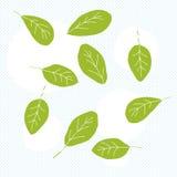 Φύλλα Doodle σπανακιού Στοκ Εικόνες