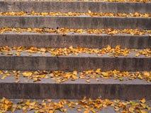 Φύλλα Ginkgo Στοκ Εικόνα