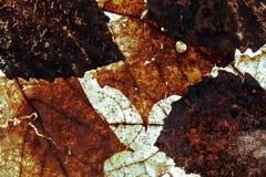 Φύλλα Grunge στοκ φωτογραφία με δικαίωμα ελεύθερης χρήσης