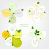 Φύλλα infographic Στοκ Εικόνες