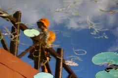 Φύλλα Lotus στοκ εικόνα με δικαίωμα ελεύθερης χρήσης