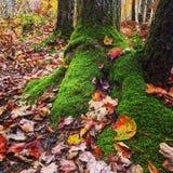 Φύλλα mossy Στοκ φωτογραφία με δικαίωμα ελεύθερης χρήσης