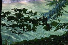 Φύλλα Silouet Στοκ εικόνα με δικαίωμα ελεύθερης χρήσης