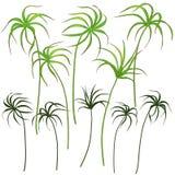Φύλλα Tsiperus καθορισμένα Στοκ φωτογραφία με δικαίωμα ελεύθερης χρήσης